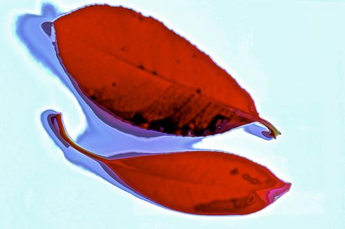 二枚の葉.jpg