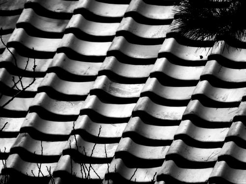 春の屋根.jpg