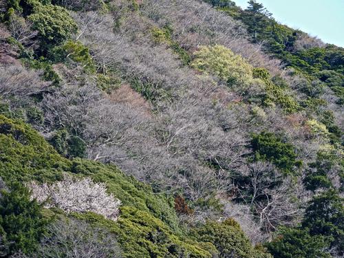 高麗山の春.jpg